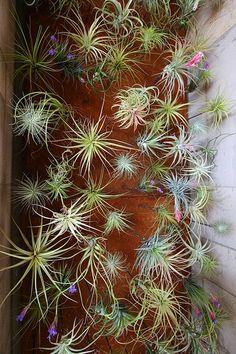 airplants :) :) :)
