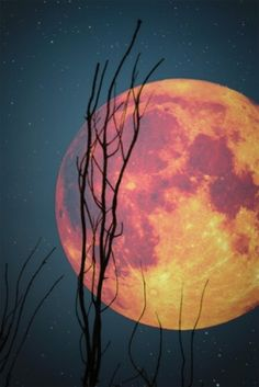 love the juxtaposition of the round moon and the straight branch!!   Nice color palette too!