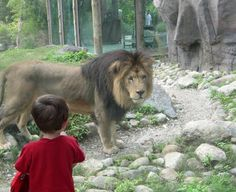 At Franklin Park Zoo with Christopher the lion