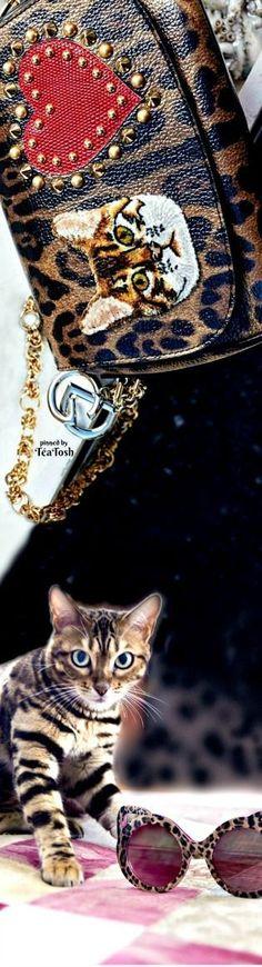 261937c61ff ❇Téa Tosh❇ Dolce   Gabbana…❤️Bengal Cats Domenico Dolce