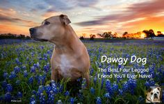 http://www.dawgydog.com/c/356565 Dawgy Dog's Howl To Your Friends Contest