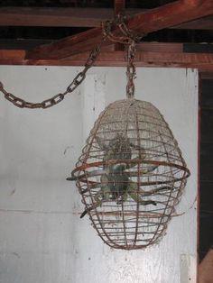 Spider cage