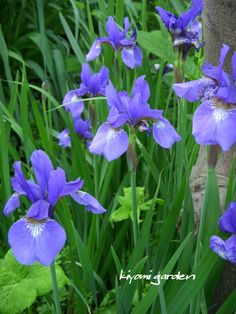 One of my all-time favorite hobbies is having a garden each year. I think my love for gardening started when I was a little girl spending summers with my Green Garden, Summer Garden, Trees To Plant, Flowers, Plants, Potting Sheds, Greenhouses, Iris, Gardens