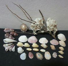Sea Shells & rare sea grass from Jeffreys Bay (cleaned handpicked)