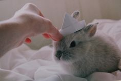 bunny in a paper hat.