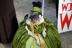 tompkins square halloween dog parade- scarlett o'hara. Oh, I love this dog so much