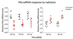 MOLECULAR GEIGER COUNTER The abundance of small pieces of genetic material called microRNAs falls or rises in the blood of mice after radiation exposure. A lethal dose of 8 grays of radiation (red dots) produces a different pattern than a serious but survivable dose of 6.5 grays (black triangles). ~~ S.S. Acharya et al/Science Translational Medicine 2015