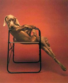 Lolita, 1990   by WILLIAM WEGMAN