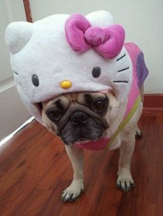 hello kitty dog costume, omg, my dog would so have this!