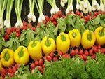 Organic Foods: Definition of Organic & Explanation of Organic Labeling