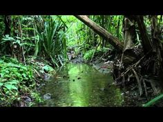"57 minutes of rainforest sounds    ""Costa Rica Rainforest Relaxation ~ 1 Hour Video - Perfectly Not Perfect!"""