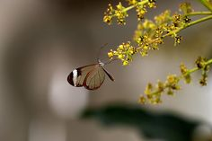 The wings of a Butterfly