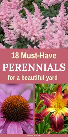These low-maintenance perennials are garden must-haves if you're looking to beautify your yard! They're easy to grow and add pops of color and texture to gardens! # perennial garden ideas 18 Low-Maintenance Perennials For Your Garden Garden Yard Ideas, Lawn And Garden, Garden Projects, Balcony Garden, Easy Garden, Garden Fencing, Garden Bed, Full Sun Garden, Full Sun Plants