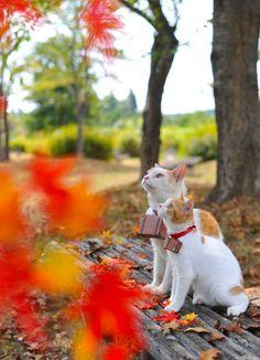 私は、にゃらん。秋の紅葉、満喫中なにょだ♪