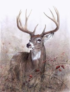 Deer in art | Whitetailed Deer and other wildlife art by Larry K. Martin