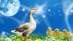 Animal Duck Full Moon - Animal, Mother, Love, Easter, Giraffe Moon, Firefox Persona, Full Moon, Star, Smoke, Flower