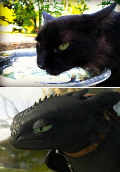 black cats that are actually toothless in disguise funny animal photos, funny animal Funny Animal Photos, Funny Animal Jokes, Cute Funny Animals, Animal Memes, Cute Baby Animals, Cute Cats, Funny Cats, Funny Memes, Meme Meme
