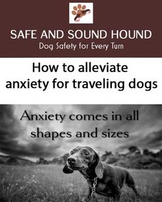 Dog car anxiety is something that many dog owners deal with. Do you have a pet that loves parks but hates getting there? It is more common than you may think. Check out this article for the best tip to ease your pups travel anxiety! Dog Training Equipment, Dog Training Tips, Stop Puppy From Biting, Medication For Dogs, Dog Friendly Hotels, Dog Travel, Travel Info, Travel Tips