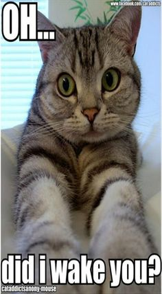 No matter how much can cats be annoying, they still lovable. Let me take you around to show you 28 joys of owning a cat that only cat people will understand Funny Animal Pictures, Funny Animals, Cute Animals, Pretty Animals, Animal Fun, Gatos Cats, Photo Chat, Owning A Cat, Cat People