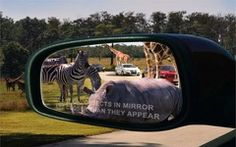 Florida's only drive-through safari and walk-through amusement park invites you to spend the day on safari with over 900 animals. With animal displays and encounters, animal feeding experiences, 5 rides, water sprayground, food, shopping and more, you are sure to have a memorable experience at Lion Country Safari.