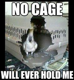 Non esiste gabbia che possa trattenermi
