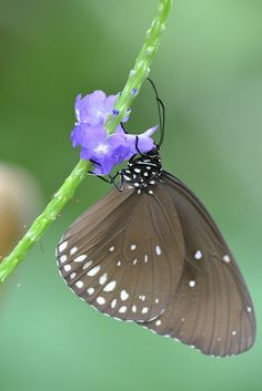"""Butterfly / """"Em período de mudanças e transformações , até a lagarta se isola. (Thaty Freitas)"""