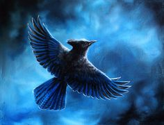Original - Steller's Jay Bird Corvid Flying into Storm Clouds Fine Art by Danielle Trudeau  FOR SALE $175.00 USD