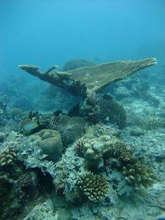 Mafia Island diving, Tanzania