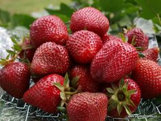 Life Hacks, Strawberry, Fruit, Gardening, Plants, Beauty, Food, Bird Bath Garden, Nursing Care