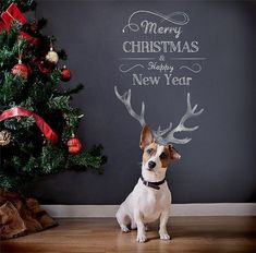 Chalkboard Antlers -  Dog Christmas Cards Ideas For Anyone Who's Obsessed with Their Pup  - Photos #DogChristmas