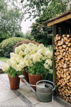Hydrangea paniculata LIVING SUMMER SNOW - Polish Nurserymen Association Cream White Color, Snow In Summer, Hydrangea Paniculata, Small Shrubs, Elements Of Nature, Kinds Of Colors, Hydrangeas, Cut Flowers, My Flower