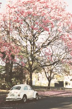 pink trees photography trees car street