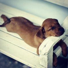 #cute #puppy #dog