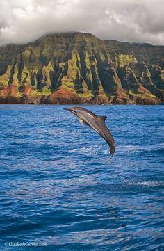 Spinner Dolphin, Kauai - Google+