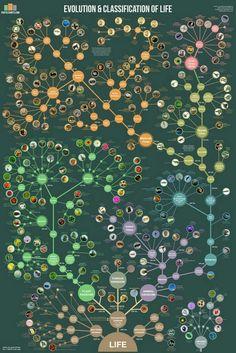 Disney Animal Kingdom, The Farm, Sweet Animal, Animal Crossing, Montessori, Evolution, Tree Diagram, Animal Classification, Life Poster