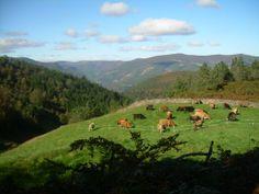Incluso estas vacas saben que la mejor cosa en esta vida es estar tranquilo y mantener la calma / Even these cows know that the best thing in  this life is be quiet and keep calm