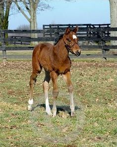 Gallery - A developing foal of Thoroughbred champion Rachel Alexander