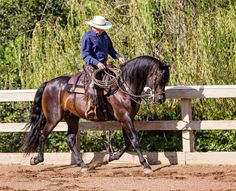 Get Engaged! How Any Horse Can Develop Beautiful, Balanced Forward Motion