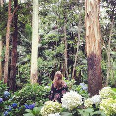Mt Tamborine Botanic Gardens