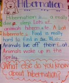 Top Ten Everyday Living Insurance Plan Misconceptions Hibernation Chit Chat - 8 Hibernation And Migration Ready To Go Resources - Teach Junkie Kindergarten Inquiry, Preschool Science, Preschool Winter, January Preschool Themes, Science Topics, Science Fun, Preschool Printables, Science Ideas, Science Experiments