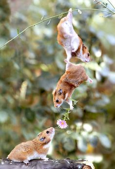 mice - bravery and friendship right here.. haha!
