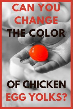 Good info! Great tips about egg yolk colors that are perfect for backyard chicken beginners!