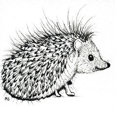 ♡ Pencil Hedgehog Art ♡