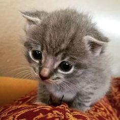 Gatos são meio sinistros. | 18 motivos para você nunca ter um gato