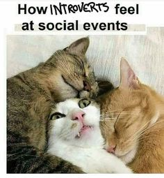 If you are an introvert and want some good laugh then here are relatable introvert memes that will speak your mind for you! Memes Humor, Funny Animal Memes, Cute Funny Animals, Funny Animal Pictures, Cute Cats, Funny Memes, Animal Humor, Funniest Cat Memes, Funny Captions