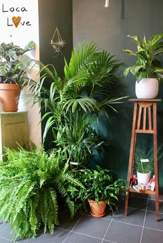 Amazing Indoor Jungle Decorations Tips and Ideas 3 You are in the right place about pet friendly house plants Here we offer you the most beautiful pictures about the cute house plants you are looking Interior Tropical, Interior Plants, Home Interior, House Plants Decor, Room With Plants, Planet Decor, Indoor Garden, Indoor Plants, Jungle Decorations