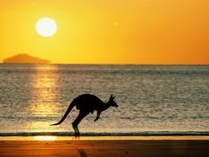 Kangaroo at the Sunrise