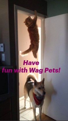 Animal Humour, Funny Animal Jokes, Cute Funny Animals, Animal Memes, Cat And Dog Memes, Funny Cats And Dogs, Cat Memes, Wolf Online, Aussie Puppies