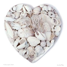 Scilly White Shell Heart by local Padstow artist Susie Ray. I found all these glorious bleached shells washed up on Tresco Island, The Scilly Isles.