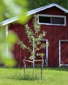 Garden || @hetkiamaalla Red Cottage, Home Photo, Little Red, Countryside, Garden, Photos, Instagram, Garten, Gardens